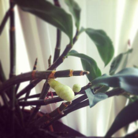 Orchid1-13b